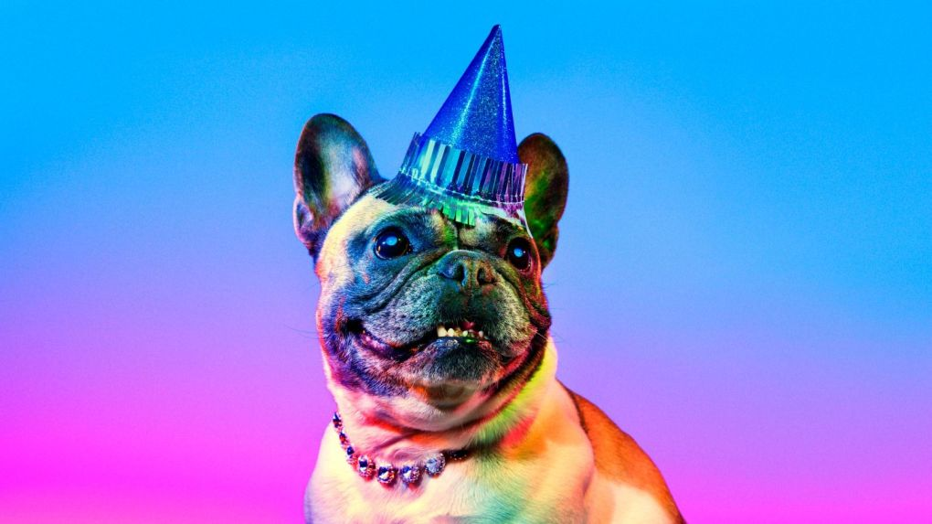 Dog-in-a-Hat.jpg